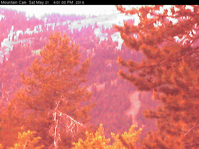 Tamarack Webcam
